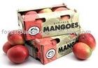 MANGO CORRUGATED PACKAGING BOX