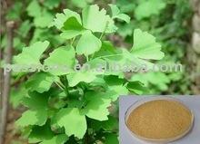 100% Natural Ginkgo Biloba Extract 24/6 / Ginkgo Biloba Extract in stock