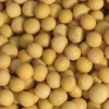 New crop 2011 Organic Soybeans, size up 6.0mm