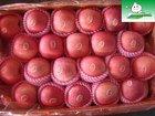 Shandong fuji apple,fruit market prices apple