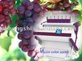 Passas, amêndoa, alho, vegetable máquina classificador de cores