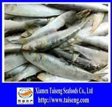 Sardinops Sagax Price Frozen Sardine