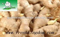 Fresh Ginger for India, Pakistan, Bangladesh