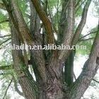 Salicin/White Willow Bark P.E.