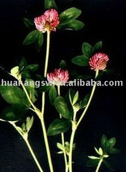 Anti cancer Red Clover Extract, Red clover p.e., Isoflavones powder