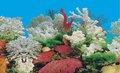 Plástico impermeável do fundo do aquário imagem j62