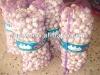 normal white garlic and pure white garlic price 2012