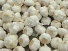 Chinese fresh garlic producers