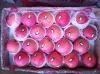 full red chinese fuji apple
