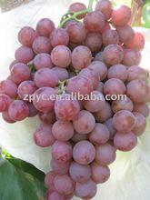 Fresh Yunan Red Grapes