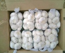 pure white garlic best garlic price 2012