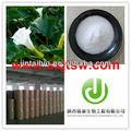 Natrual 98% bromhidrato de escopolamina