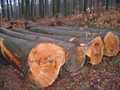 Europeu& africano toras de madeira para venda, excelente preço