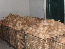 MAWA Coconut - Kelapa MAWA