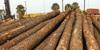 Pine wood Lumber KD 8-12% , Pine Lumber KD and Spruce Logs