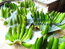 Vietnam best quality fresh cavendish banana