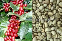 elevato standard verde chicchi di caffè robusta per il 2015