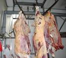 beef meat/Indian cow meat/ fresh beef meat/fresh beef flesh/frozen beef meat and flesh/beef thender hung carcasses