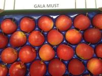 Gala Must apples