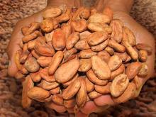 Sanchez Cocoa Beans