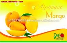 Alphonso Mango Exporter