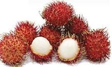 Fresh Rambutan Fruit with sweet taste and safe quality