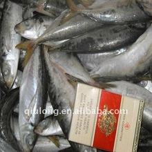 seasoned horse mackerel whole round