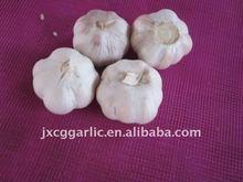 fresh normal white garlic 2015 new crop