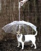 new design pet dog umbrella