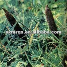 100% Natural High Quality Black Cohosh Extract