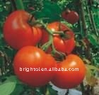 Natural health care product plant extract Lycopene (Tomato Extract)