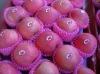 apple exporter--yantai fresh fuji apples in CA room