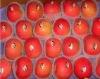 2012 new crop china yantai Fresh Red Apple