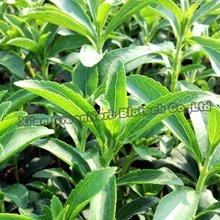 Natural Sweetener Stevia Extract