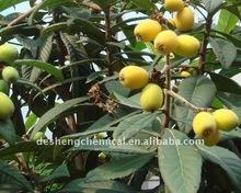 Ursolic Acid 25%/Rosemary Extract Rosemary sourced