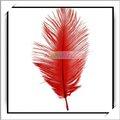 Venta al por mayor! 10 piezas de color rojo de la boda de plumas de avestruz-13006994 decoraciones