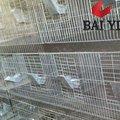 produção animal coelho gaiola de reprodução