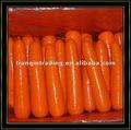 2012 crop carotte fraîche
