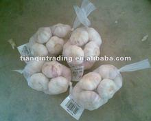 natural normal white garlic seller