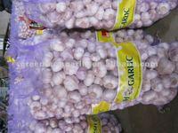 2012 white garlic