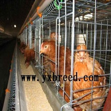 Chicken farm design types of poultry cage