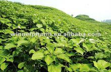 30% Ramie Leaf Extract powder