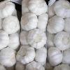 fresh garlic 2011