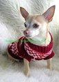 suéteres de perro