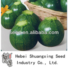Jade Pearl summer squash vegetable seed f1