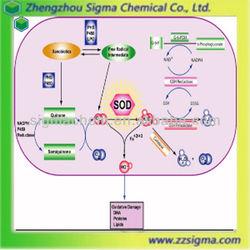 Superoxide dismutase Cu/Zn SOD enzyme