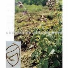 good quality 20% Black Cohosh Extract powder(Triterpene Glycosides 2.5%-20%)