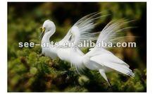 Egret photos on canvas, digital art