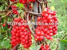 schisandra berriy extract