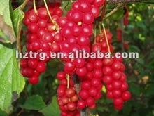 Protect liver: schisandra berriy plant extract
